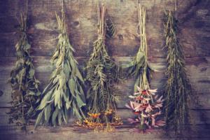 37507688-vintage-photo-stylis-e-de-bouquets-de-plantes-m-dicinales-sur-le-mur-en-bois-de-la-m-decine-base-de